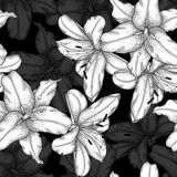 Beautiful monochrome, black and white seamless background with lilies. Royalty Free Stock Photos