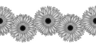 Beautiful monochrome, black and white seamless horizontal frame element of gray  gerbera flowers. Hand-drawn with effect of drawing in watercolor Royalty Free Stock Images