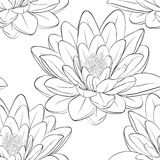 Beautiful monochrome, black and white seamless pattern with lotus flowers. Royalty Free Stock Image