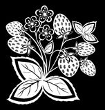 Beautiful monochrome black and white strawberry, flower with leaves and swirls isolated. Stock Photos