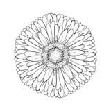 Beautiful monochrome gerbera isolated on white background. for greeting cards, wedding invitations, birthday, Valentine`s Day, royalty free illustration