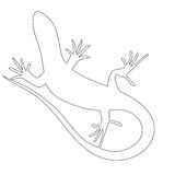 Beautiful  monochrome lizard, lizard silhouette Royalty Free Stock Photography