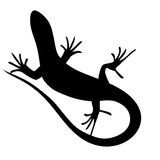 Beautiful  monochrome lizard, lizard silhouette Royalty Free Stock Image