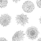 Beautiful monochrome sketch, black and white dahlia flower seamless wallpaper Royalty Free Stock Photography