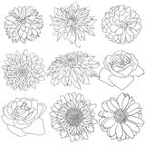 Beautiful monochrome sketch, black and white flower isolated Stock Photography