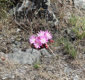 Beautiful Montana flowers Stock Images