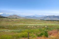 Beautiful Montana landscape Royalty Free Stock Image