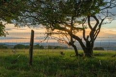 Beautiful dramatic Summer sunset landscape over English countrys. Beautiful moody Summer sunset landscape over English countryside with lovely light Stock Images
