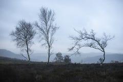 Moody Winter landscape image of skeletal trees in Peak District in England against dramatic dark sky stock images