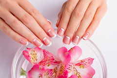 Beautiful moon french manicure. Delicate pink freesia in a bowl with water stock image
