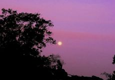 A beautiful moon on lovely pink sunset sky stock images