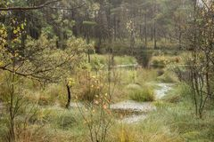 Beautiful moor landscape in the lueneburger heide royalty free stock photos