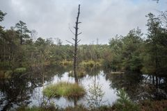 Beautiful moor landscape in the lueneburger heide royalty free stock images