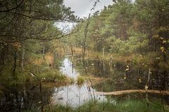 Beautiful moor landscape in the lueneburger heide royalty free stock photography