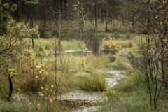 Beautiful moor landscape in the lueneburger heide royalty free stock photo