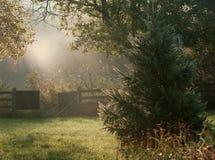 Beautiful Morning. royalty free stock photography