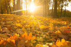 Beautiful morning in autumn forest Royalty Free Stock Photos