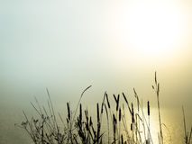 Beautiful morning fog over a lake Stock Photography