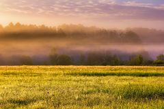 Beautiful morning foggy meadow landscape Royalty Free Stock Photos