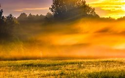 Beautiful morning foggy meadow landscape Stock Images