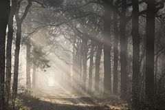 Morning forest with sun shining through the trees Royalty Free Stock Photo