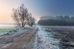 Beautiful morning with frost on plants. Autumnal landscape. Royalty Free Stock Photography