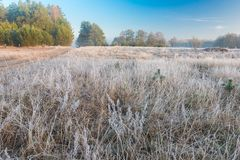 Beautiful morning with frost on plants. Autumnal landscape. Royalty Free Stock Images
