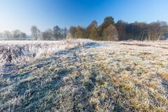Beautiful morning with frost on plants. Autumnal landscape. Stock Photo