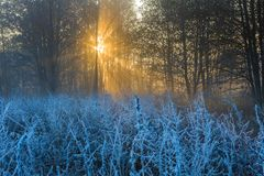 Beautiful morning with frost on plants. Autumnal landscape. Stock Photos
