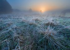 Beautiful morning with frost on plants. Autumnal landscape. Stock Image