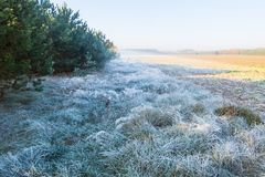 Beautiful morning with frost on plants. Autumnal landscape. Stock Photography