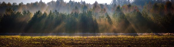 Beautiful morning with frost on plants. Autumnal landscape. Royalty Free Stock Photos