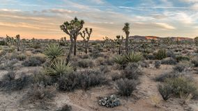 A beautiful morning in the Joshua Tree Nationalpark royalty free stock image