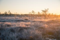 A beautiful morning landscape in a frozen swamp. Bright, colorful sunrise in frozen wetlands. Stock Photo