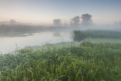 Beautiful morning  landscape near a small river. Royalty Free Stock Photos