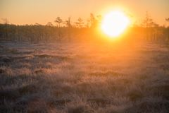Beautiful morning landscape with a rising sun. Colorful scenery of a frozen wetlands in autumn. First frost in nature. Bright sun shine with flares royalty free stock image