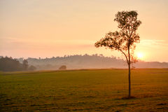 Beautiful morning light fog lights, trees, mountains, beautiful. Stock Image
