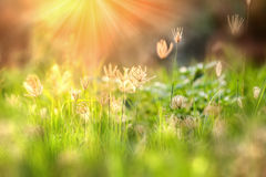 Beautiful morning light in the meadow with a bokeh in a foregrou Royalty Free Stock Photography