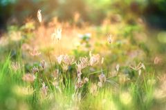 Beautiful morning light in the meadow with a bokeh in a foregrou Stock Images