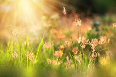 Beautiful morning light in the meadow with a bokeh in a foregrou Stock Photo