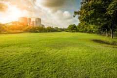 Beautiful morning light in public park with grass field and gree Royalty Free Stock Image