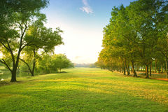 Beautiful morning light in public park with green grass field an. D green fresh tree plant perspective to copy space for multipurpose Royalty Free Stock Images