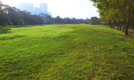 Beautiful morning light in public park with green grass field an Stock Images