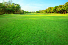 Beautiful morning light in public park with green grass field an Royalty Free Stock Photos