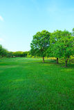 Beautiful morning light in public park with green grass field an Stock Photos
