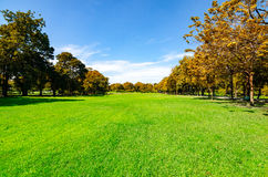 Beautiful morning light in public park with green grass field an Stock Photo
