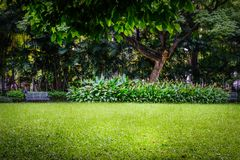 Public park with green grass field and green fresh plant Royalty Free Stock Image