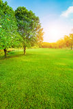 Beautiful morning light in public park with green grass field ve Royalty Free Stock Images