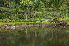 Beautiful morning light and reflected botanic garden Royalty Free Stock Image