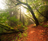 Beautiful morning in lush forest Royalty Free Stock Photos